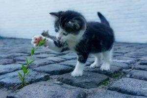<b>I Gatti: Come Renderli più Felici</b>