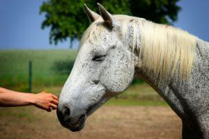 <b>Come Avvicinarsi al Cavallo</b>