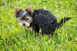 <b>Perché alcuni cani fanno i bisogni in casa?</b>