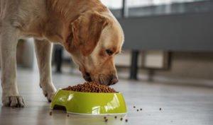 alimenti-sani-cani